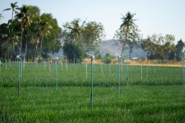 Die wassersysteme der spinger-landwirte tragen dazu bei, dass sich das wasser gut ausbreitet, und sparen den landwirten bewässerungszeit.