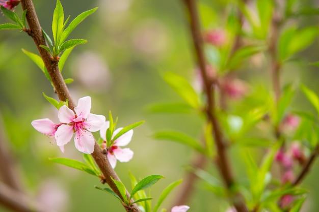 Die weißen blüten im frühlingston.