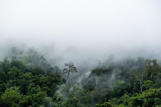 Die weißen wolken haben eine seltsame form und berg. wolken schweben über den bergen. neblige neblige berglandschaft mit tannenwald