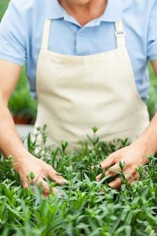 Die welt grün machen. abgeschnittenes bild eines mannes in schürze, der sich um pflanzen kümmert, während er im gewächshaus steht