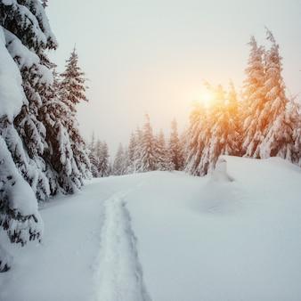Die winterstraße. schönheitswelt. karpaten, ukraine, europa.