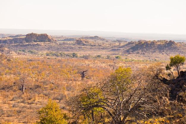 Die wüstenlandschaft des mapungubwe nationalparks, zurückhaltendes aber majestätisches reiseziel in südafrika. geflochtene akazien und riesige affenbrotbäume mit roten sandsteinfelsen.
