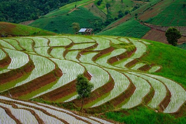 Die wunderschöne landschaft der terrassierten reisfelder im pong pieng forest in nordthailand