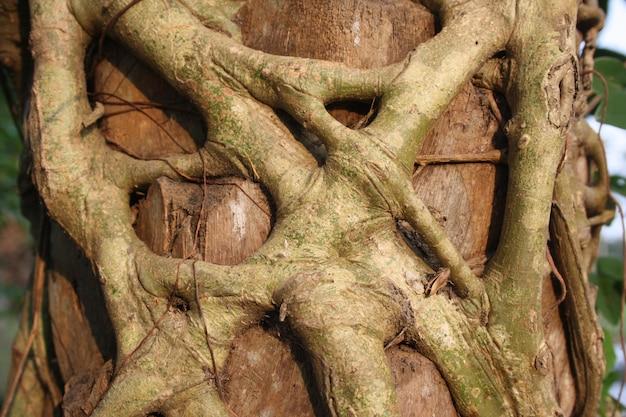 Die wurzeln des botbaums