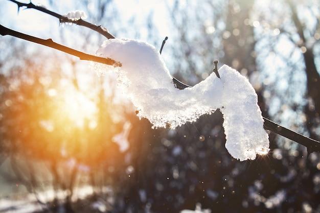 Die zeit von winter und schnee. wintersonne. blauer himmel. schneebedeckte natur im winter. frostige luft.