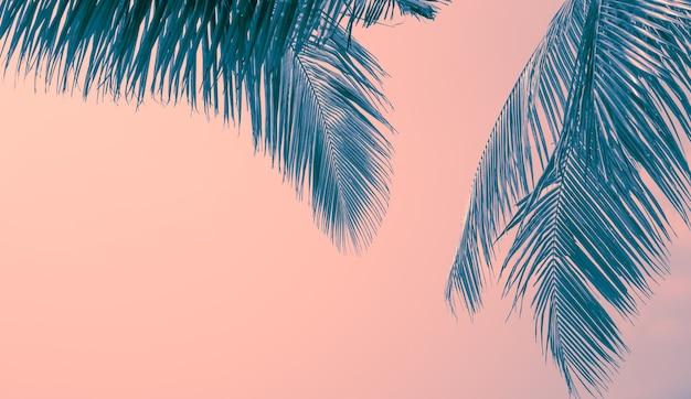 Die zweige einer palme sind auf einem pastellfarbenen hintergrund blau getönt reisen und tourismus in asien