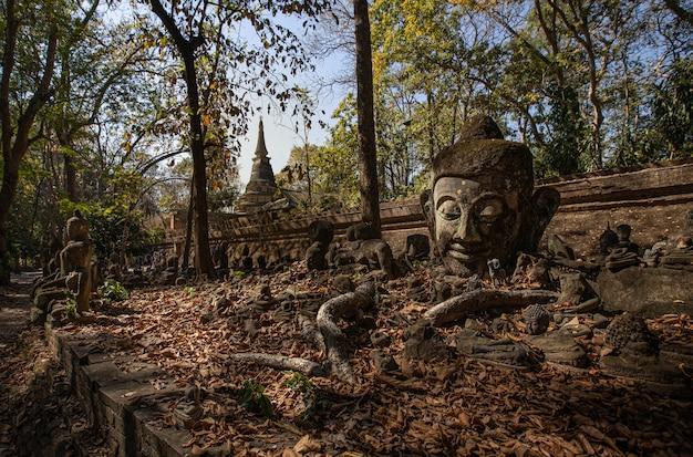 Dies ist das bild von wat umong, buddhistischer tempel in chiang mai, thailand