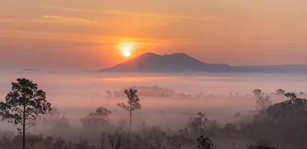 Dies ist das foto von berg pidsanulok thailand am morgen während des sonnenaufgangs mit nebel und nebel gebirgszug und bäume sihoulette.