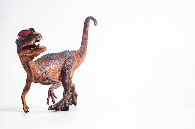 Dilophosaurus auf weißem hintergrund