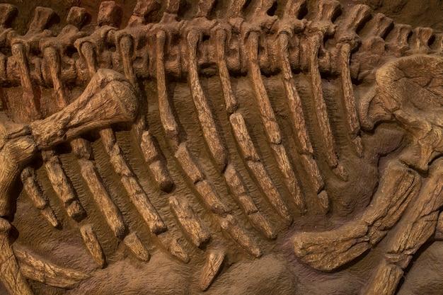 Dinosaurier-fossil