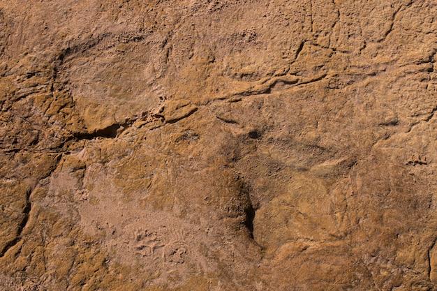 Dinosaurierabdrücke auf stein