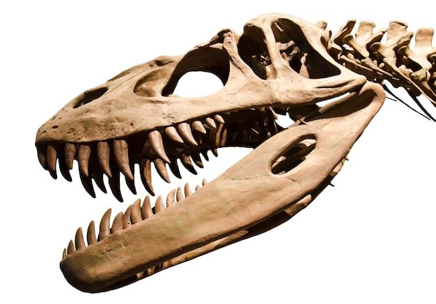 Dinosaurierskelett über weißem getrenntem hintergrund