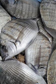 Diplodus sargus weißer seebrassenfisch