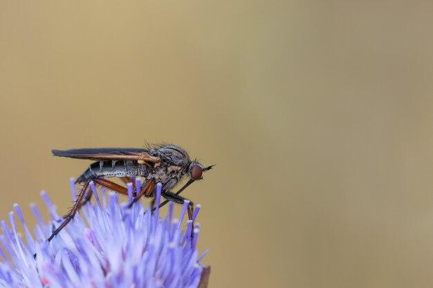 Dipterös. fliegenarten in ihrer natürlichen umgebung fotografiert.