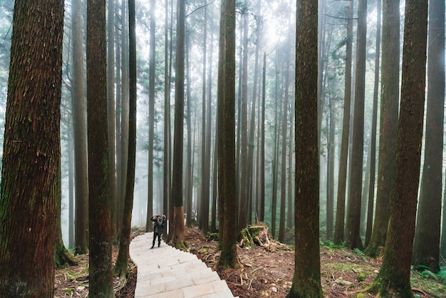 Direktes sonnenlicht durch bäume mit nebel im wald mit dem touristen, der auf steintreppe in alishan national forest recreation area steht.