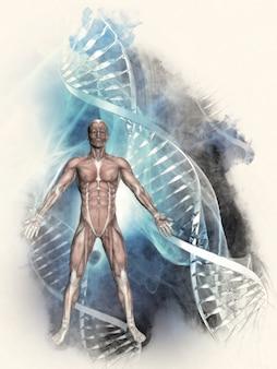 Dna-helix mit dem menschlichen körper