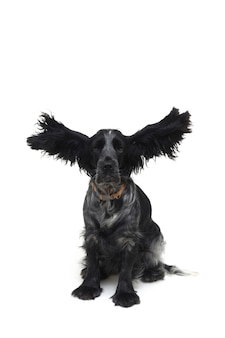 Dog cocker