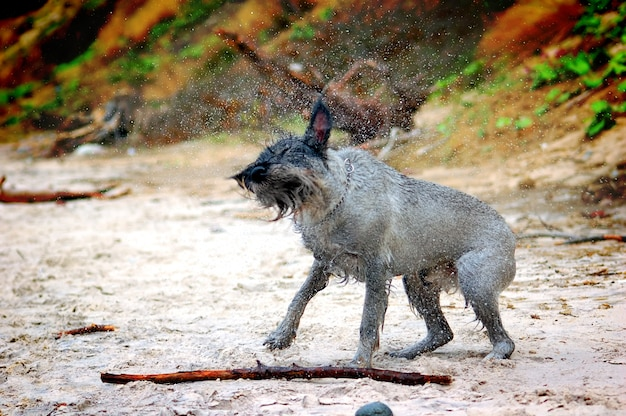 Dog shakin
