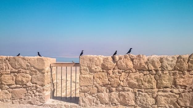 Dohlen auf dem panorama der masada-festung in israel.