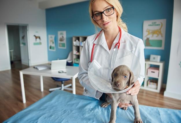 Doktor, der hund im haustierhalsband hält