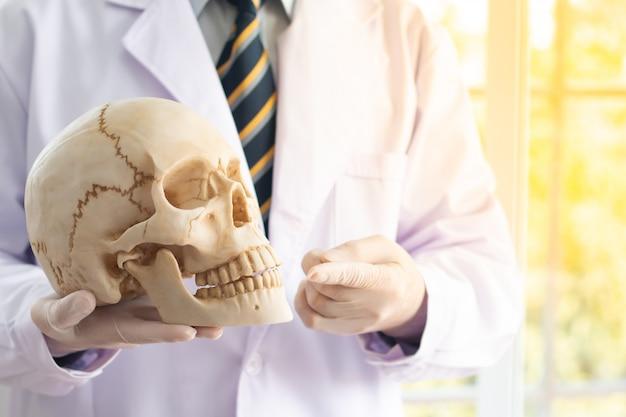 Doktor hält einen menschlichen schädel in seinen händen und zeigt auf den schädel und den kopienraum.