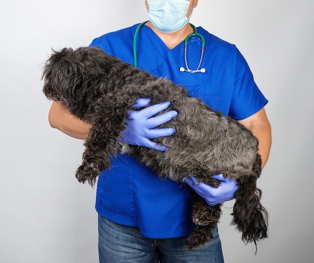 Doktor in den blauen einheitlichen und sterilen latexhandschuhen, die einen flaumigen schwarzen hund halten