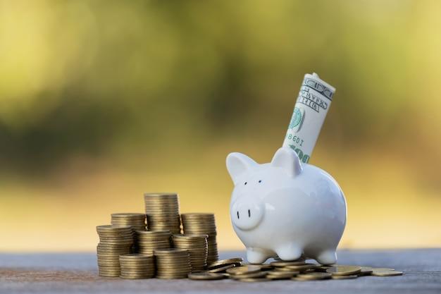 Dollargeld in sparschwein-ideen stecken, um geld zu sparen