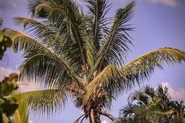 Dominikanische palmendetail unter blauem himmel