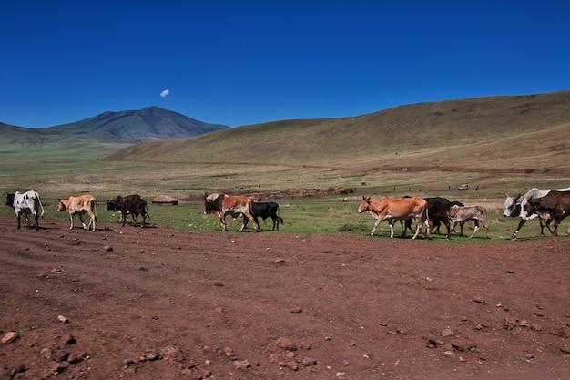 Dorf von masai in tansania, afrika