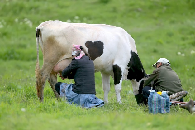 Dorfbewohner melken die kuh von hand