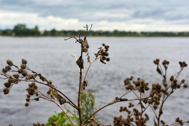 Dornige klettenbüsche im hintergrund des sees. landschaft mit klette
