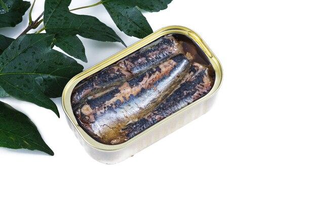 Dose sardinen in olivenöl draufsicht und weißem hintergrund