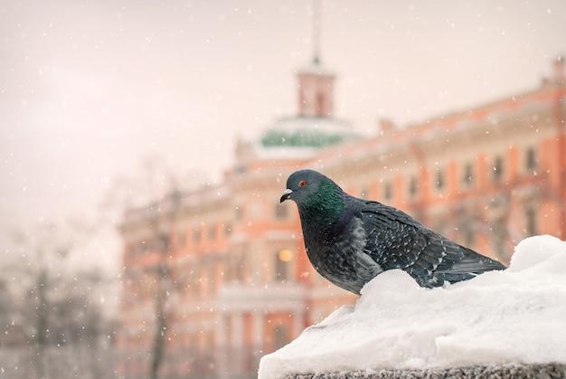 Dove sitzt im winter während eines schneefalls vor dem hintergrund der altstadt auf der brüstung des dammes.