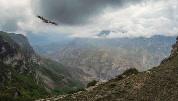 Dramatische berglandschaft mit fluss im tal zwischen bunten felsen unter bewölktem himmel. szenische kaukasische grüne landschaft mit gebirgsfluss in tiefer schlucht unter bewölktem himmel mit fliegendem adler.