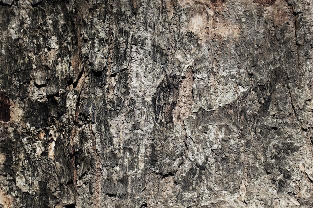 Dramatische textur der äußeren rinde eines baumes