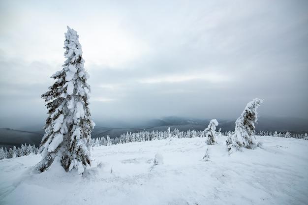 Dramatische winterlandschaft mit fichtenwald kauerte mit weißem schnee in kalten gefrorenen bergen