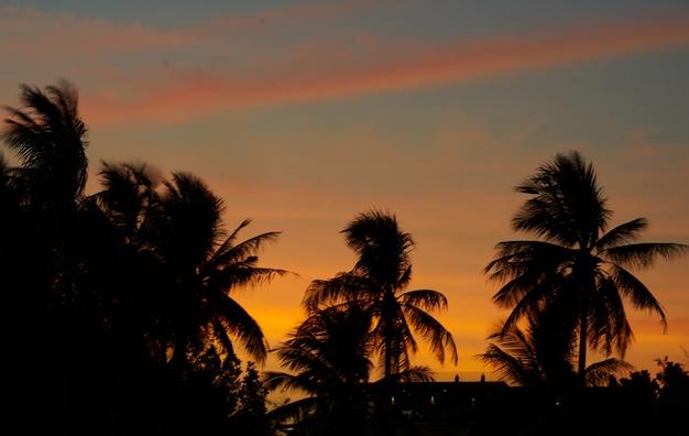 Dramatischer himmel in blau und orange auf silhouette-kokospalmen und hintergrund der stadtlandschaft mit kopienraum