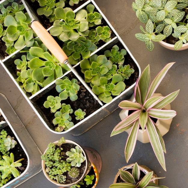 Draufsicht anordnung verschiedener pflanzen nahaufnahme