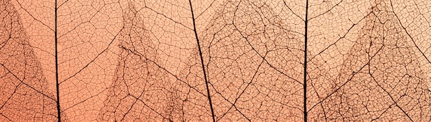 Draufsicht auf blätter mit durchscheinender textur
