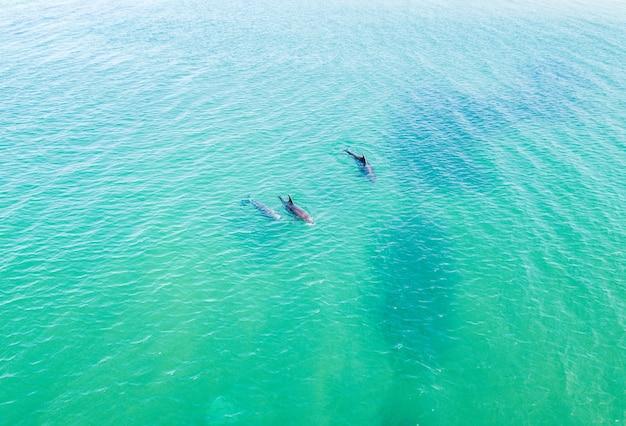 Draufsicht auf delfine im schwarzen meer. anapa 2020