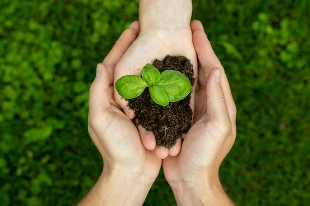 Draufsicht auf die hand einer frau, die einen spross mit erde passiert, um sie in die hände eines mannes zu pflanzen