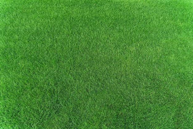 Draufsicht auf die textur des grünen grases für den hintergrund. grünes rasenmuster und beschaffenheitshintergrund. nahaufnahme