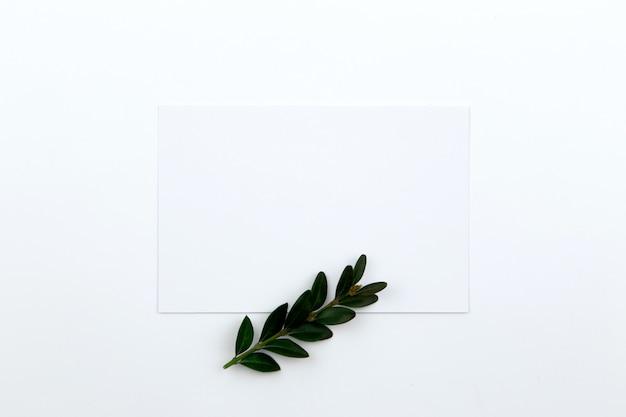Draufsicht auf ein blatt papier und einen grünen zweig mit blättern. heldenbild und textfreiraum