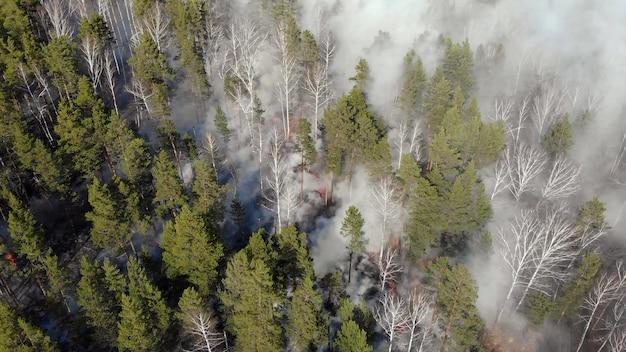 Draufsicht auf ein feuer brach im wald aus