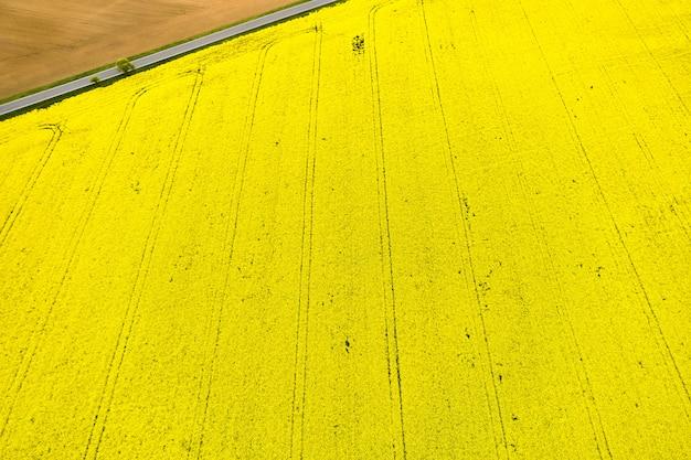 Draufsicht auf ein leuchtend gelbes rapsfeld und einen teil eines leeren feldes, das durch straße in einer ecke getrennt wird. natürliche textur mit kopierraum.