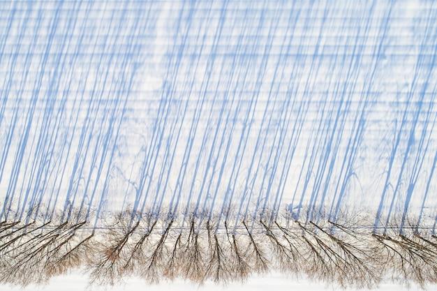Draufsicht auf eine gerade linie von kahlen bäumen mit langen schatten entlang eines schneebedeckten feldes