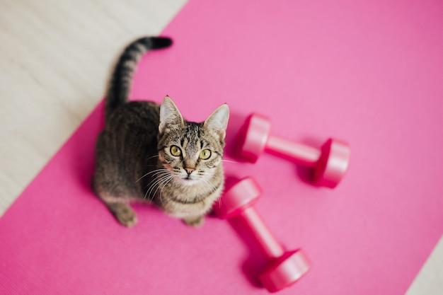 Draufsicht auf eine katze, die mit hanteln auf einer rosa matte sitzt