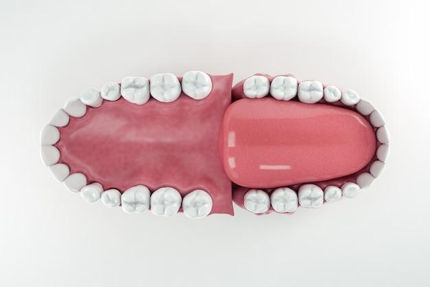 Draufsicht auf einen offenen mund, der alle zähne zeigt; 3d; 3d-illustration