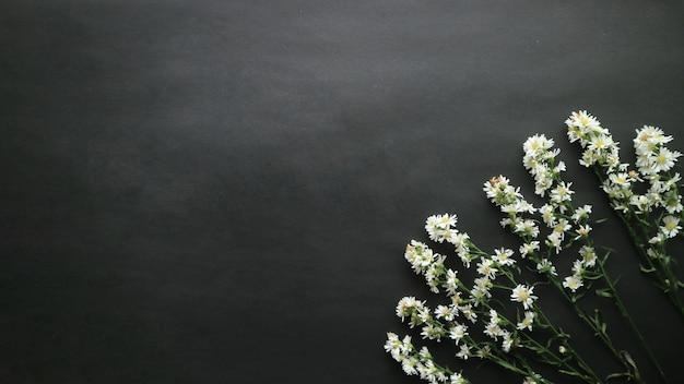 Draufsicht auf einige frische gänseblümchen-hintergrund
