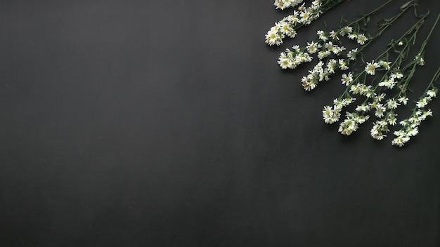 Draufsicht auf einige frische gänseblümchen mit kopierraum